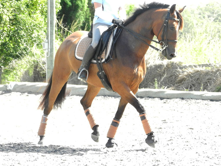 CC_first-time-doubleBridle-1_2013-0206_s