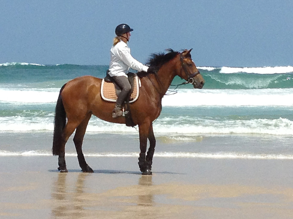 CC, bay mare by A'Seduction, born 2006, part-owned by Sue MacDonald, here at Patches Beach.