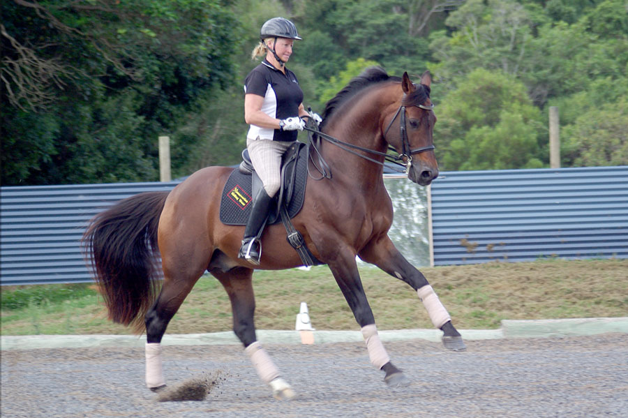 A'Seduction Warmboold Grand Prix Stallion