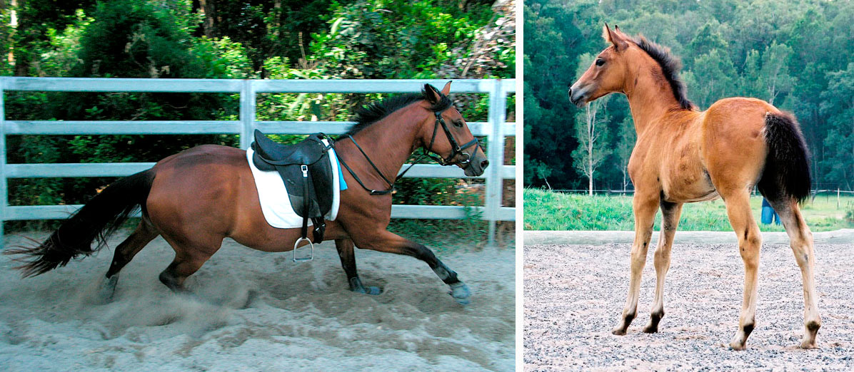 CC (A Spider Bite) in 2009, 3ys old, and as a 7 week old filly in Jan 2007
