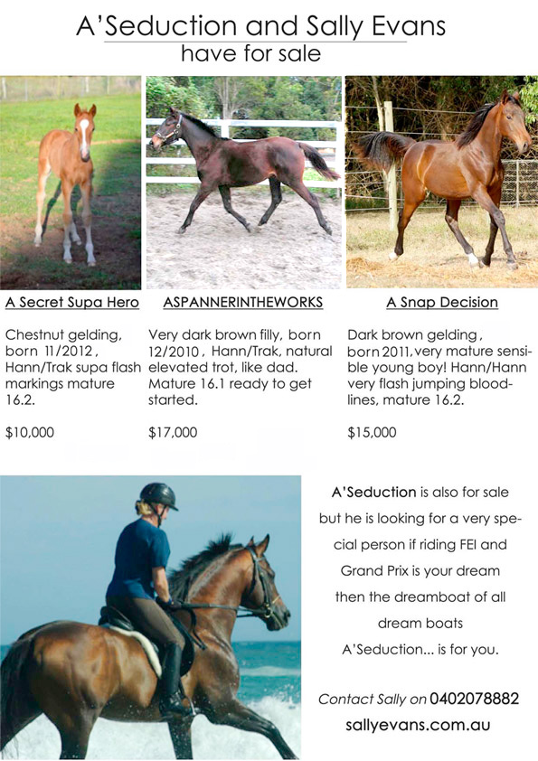 The last three A'Seduction foals for sale as of September 2013