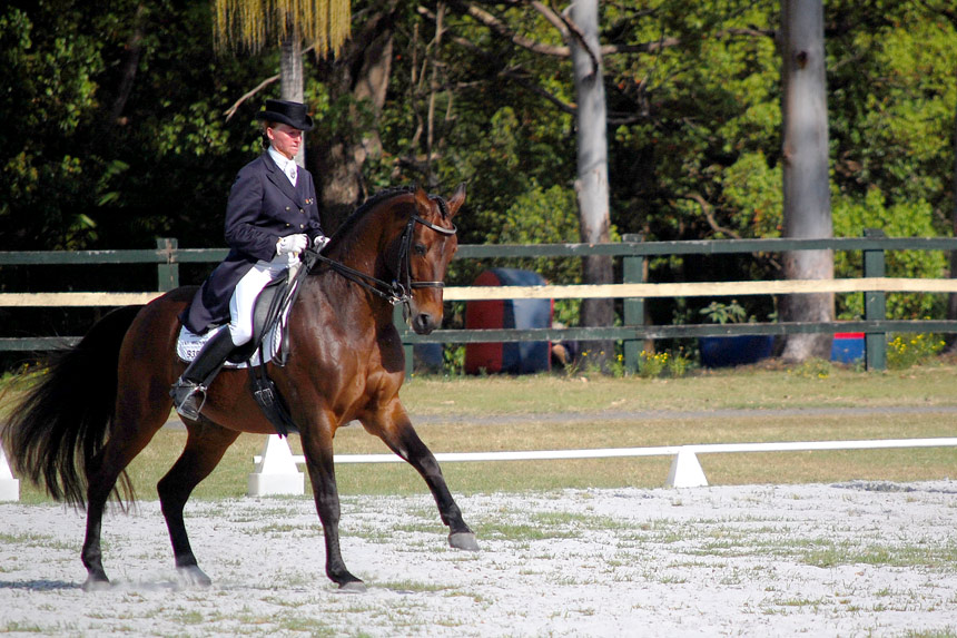 A'Seduction in the Inter2 at Summerland Dressage Group Championships, 31.08.2013