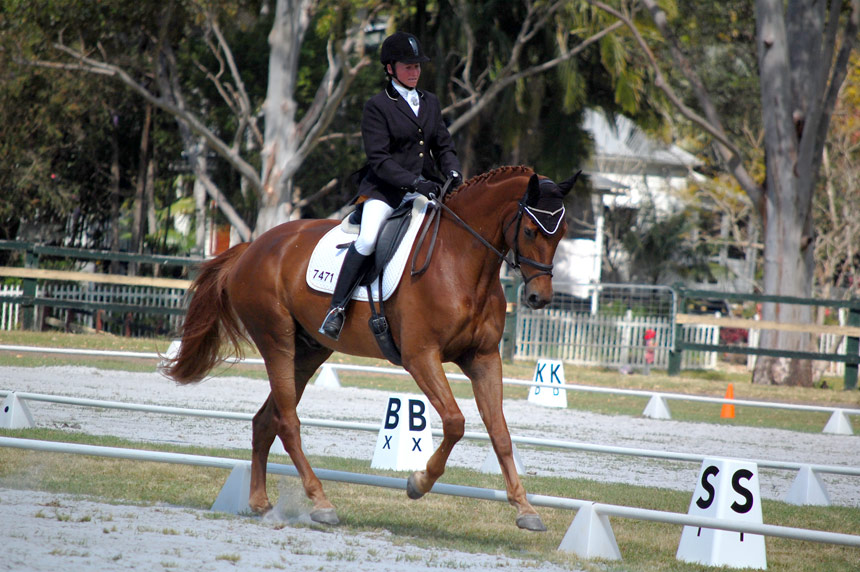 A Sydney Boy at Summerland Dressage Group Championships, 31.08.2013
