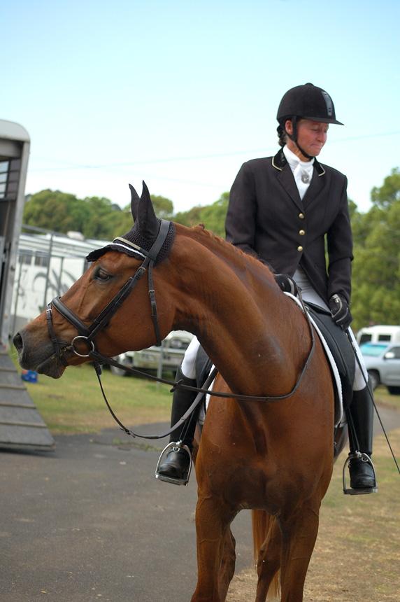 A Sydney Boy at Summerland Dressage Group Championships, 31.08.2013