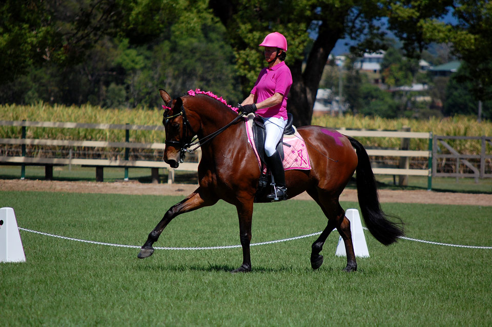 "CC in the Advanced at the ""Power of Pink Dressage"" 2013 of the Tweed Valley Equestrian Group in Murwillumbah"