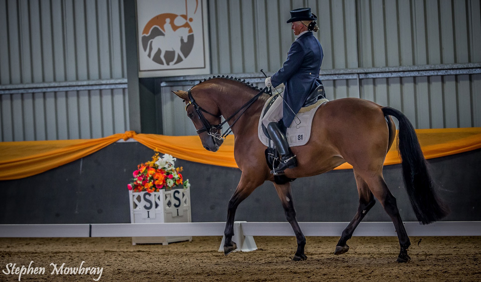 CC_at-Dressage-with-Altitude_2014_08_s