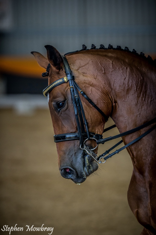 CC_at-Dressage-with-Altitude_2014_13_s