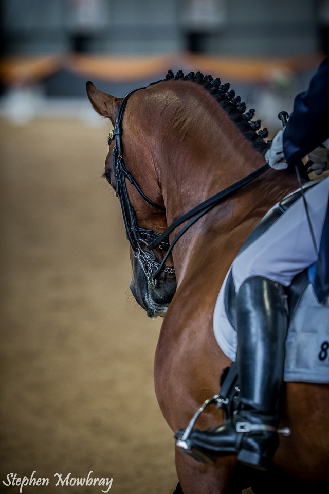 CC at ThinLine Dressage with Altitude International CDI 3*