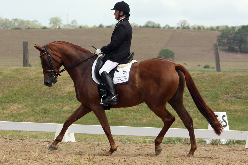 Penny by A'Seduction, Grafton Dressage day 2.3.2014