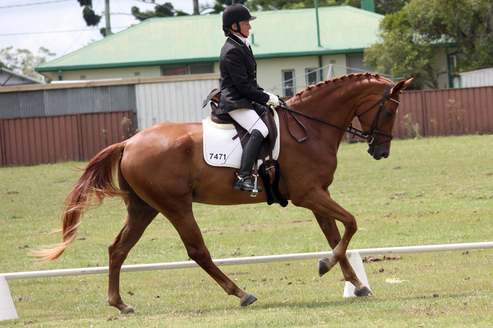 Sydney, 70% Novice test, Grafton Dressage day 2014