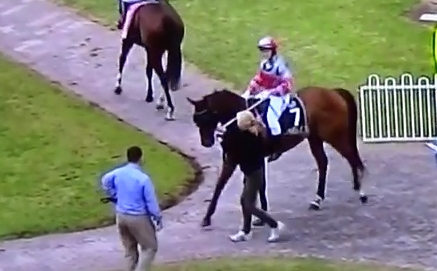 Vilayet, Pete's racehorse, at the end of his Lismore Trial 26.7.2014, which he won
