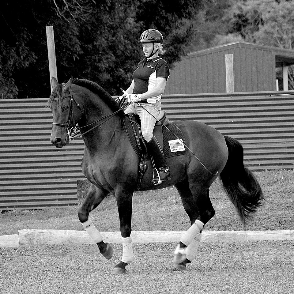 Warmblood stallion A'Seduction 11 yrs old at FEI Small Tour level