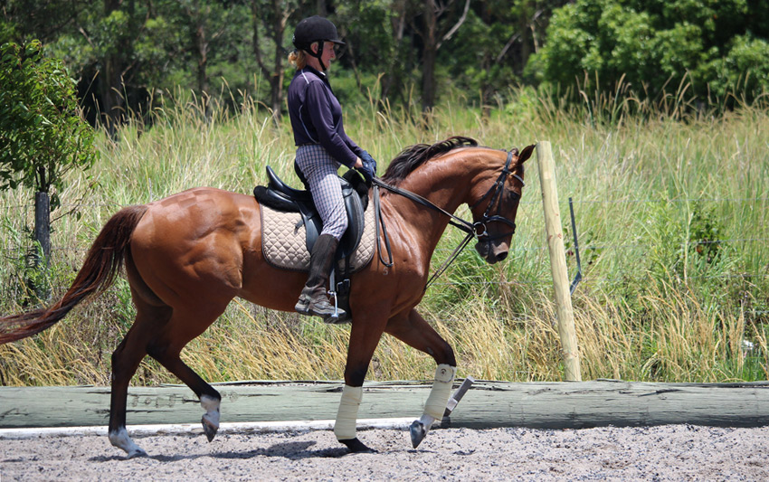 Vilajet, thoroughbred, in training by Sally Evans, at Sally's Dressage Stables, for sale