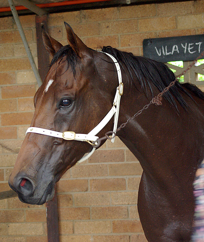 "Vilayet in his racing days at Lismore race track, Dec 2012, who will now be known in the dressage arena as ""Russian Lights"""