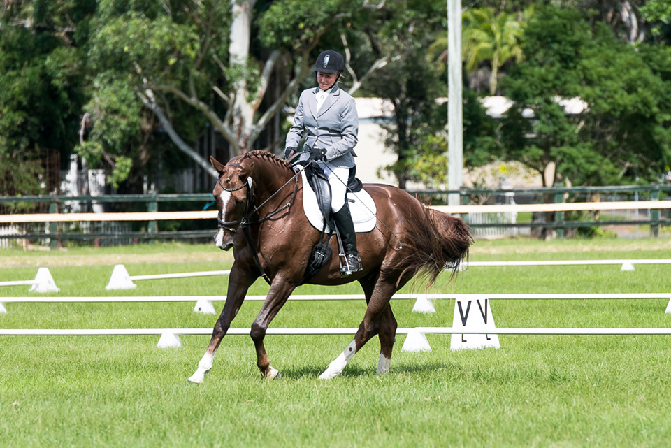 Scuba under Sally competing at Summerland Dressage Club, Bangalow NSW on 18.4.2015