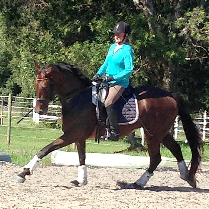A Snap Decision (Snap) born 2011, by A'Seduction, in canter training at SDS
