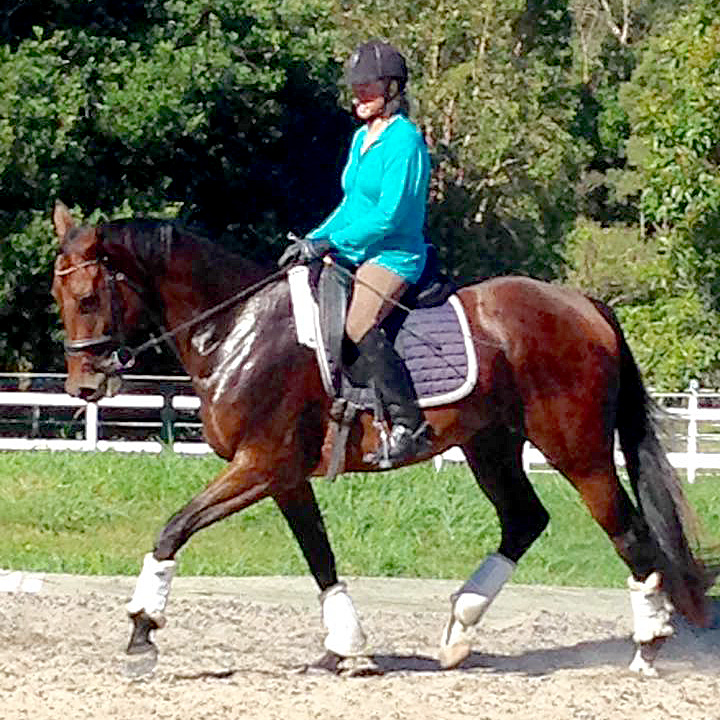 A Snap Decision (Snap) born 2011, by A'Seduction, in trot training at SDS