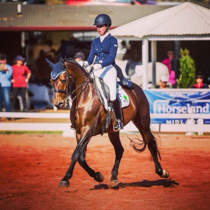 Basil competing with his young rider Chloe Moon in WA at FEI