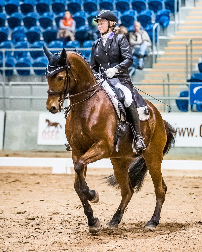 Sally Evans riding A SpiderBite performing a canter piroutte