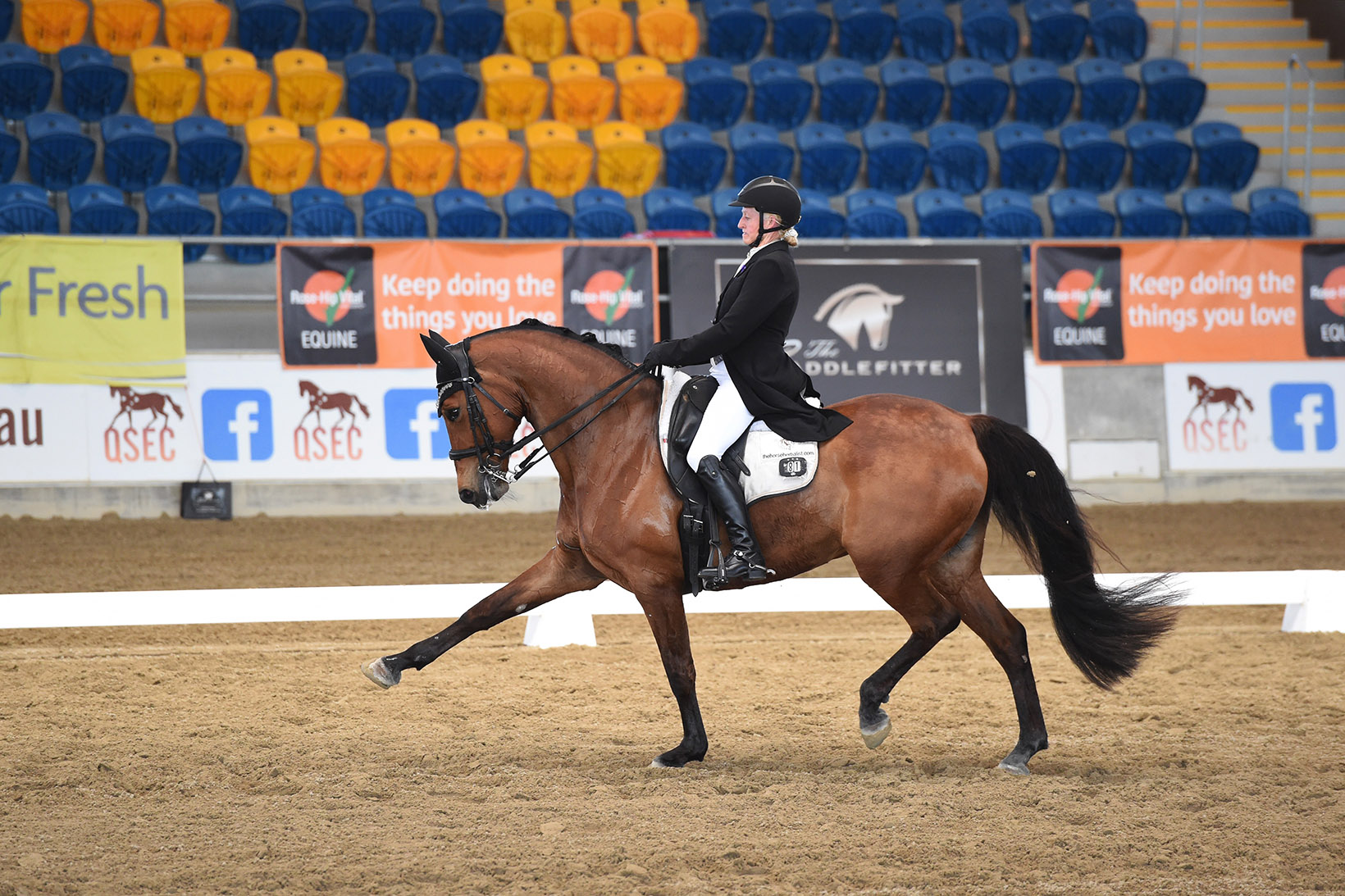 Extended trot, showing A Spiderbite and Sally at the QLD State Dressage Championships 2019. Photo: Oz Shotz