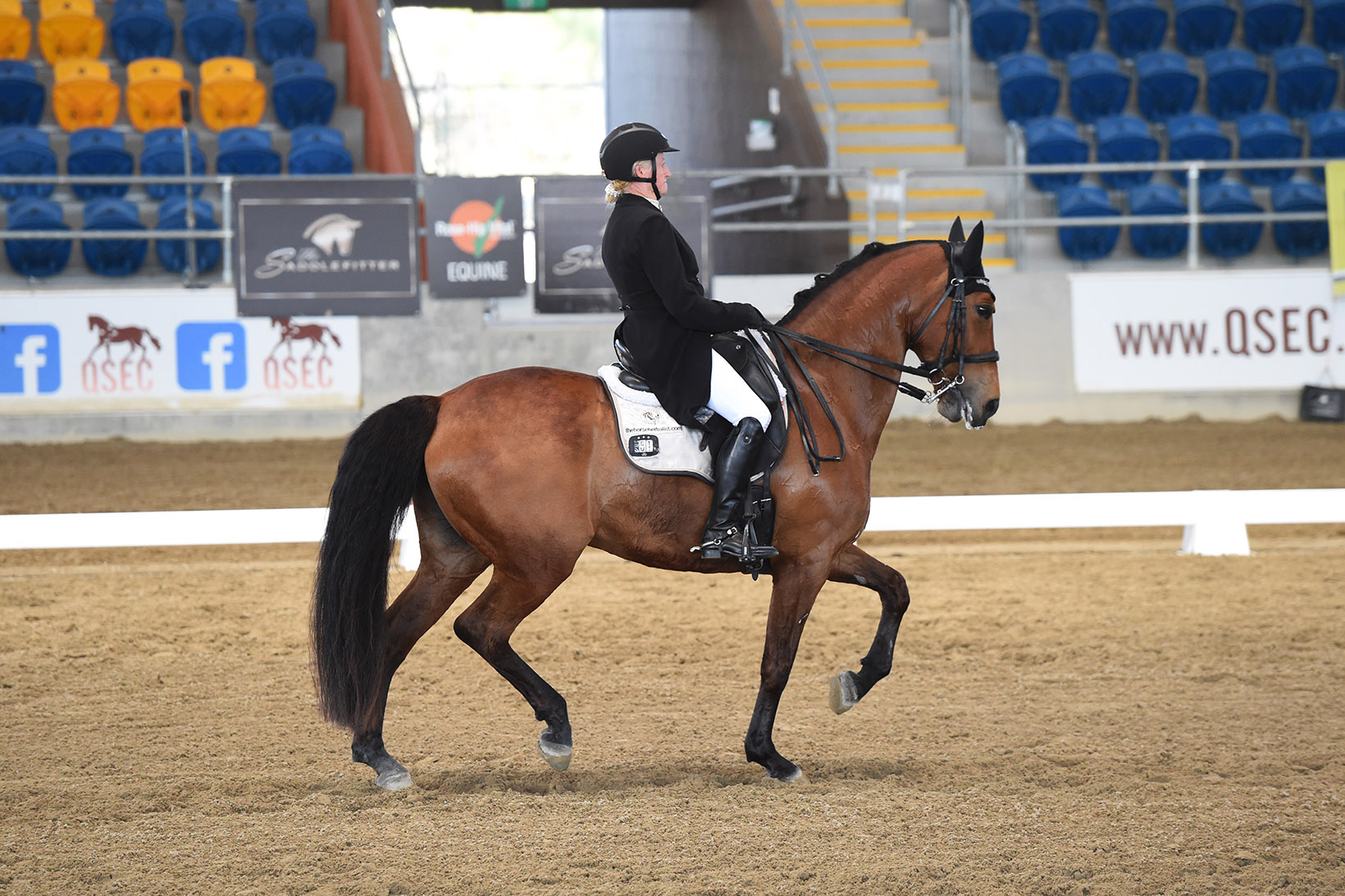 Dressage horse showing passage: A Spiderbite and Sally at the QLD State Dressage Championships 2019. Photo: Oz Shotz