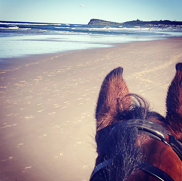 Riders view of looking past horse's ears onto beach